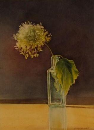 Hydrangea - Flower