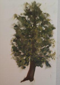 cedar, study, greens, tree